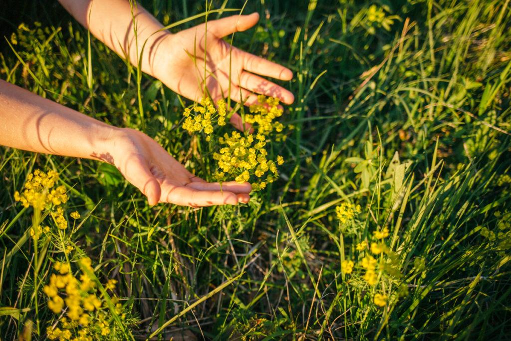 Gartenberatung Naturverbindung Evelyn Weidner