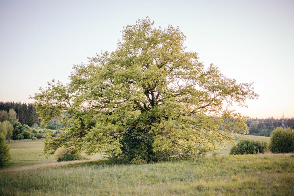 Naturverbindung_Evelyn-Weidner